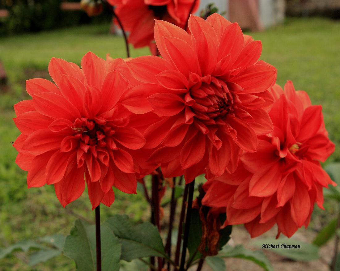Enter Your E Mail Address Send Add Remove Home Photo Flowers Flowersnames Of Red